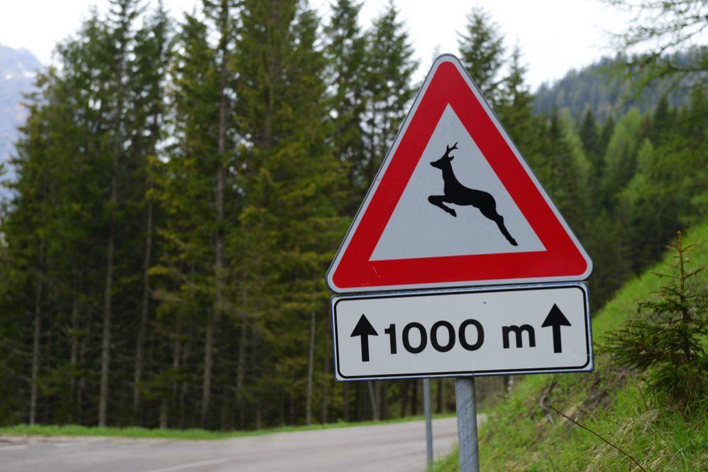 Avoid Hitting a Deer 3