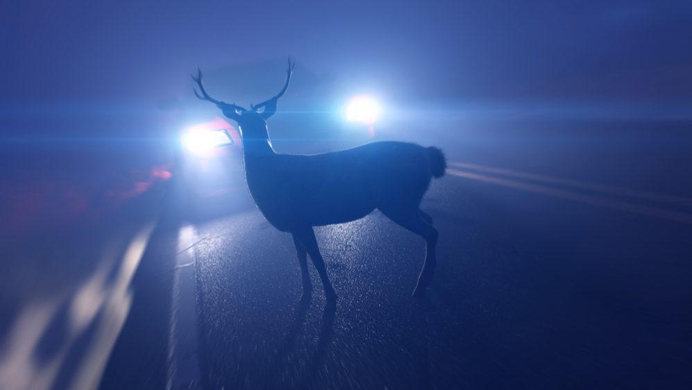 Avoid Hitting a Deer