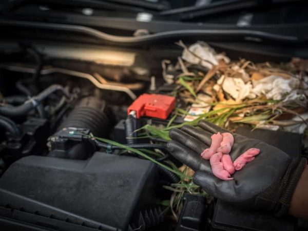 10 Tips to Keep Mice Out of the Car