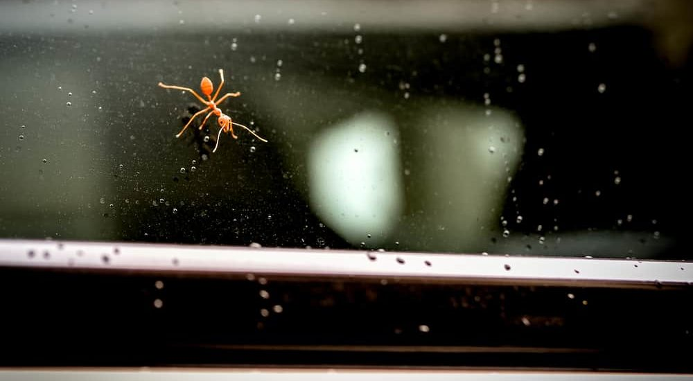 Get Rid of Ants in a Car