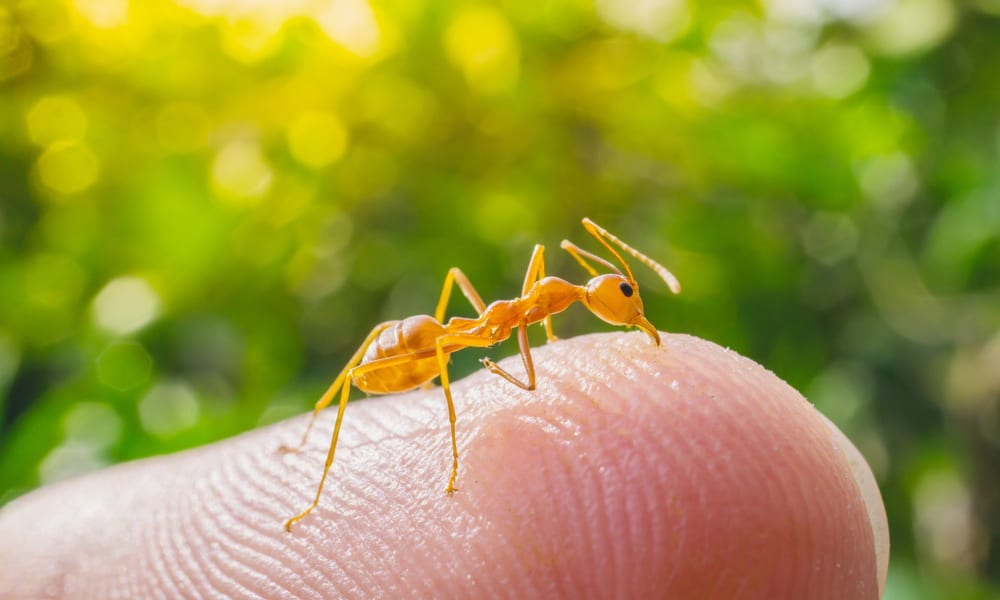 Why having ants in your car is bad